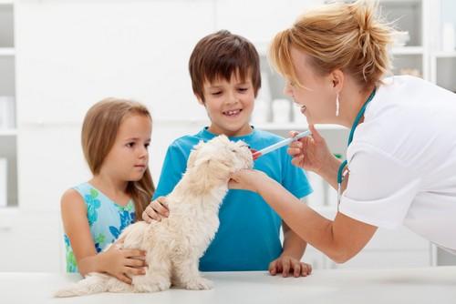 Vaccinations  Hartford, KY